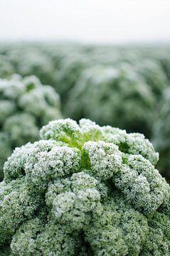 Bauernkohl mit Frost von Pim Haring