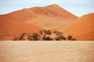 NAMIBIA ... Namib Desert  Dunes I