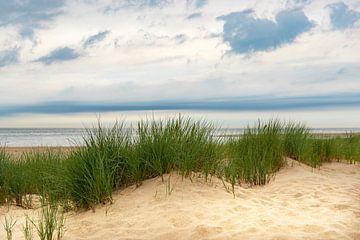Blick von den Dünen auf den Sandstrand der Nordseeküste von Sjoerd van der Wal