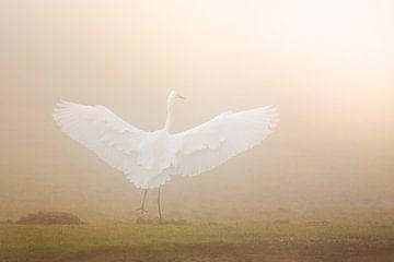 Dansend naar het licht van Evert Jan Kip