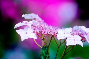 Pittoreske Blumen von Noortje Hagenaars