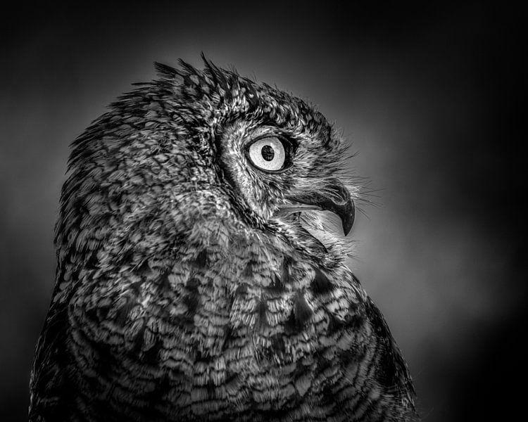 Het grote oog van Ruud Peters