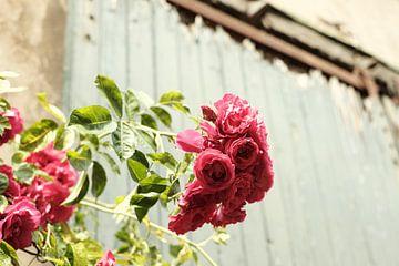 Vintage Rose auf grünem Hintergrund | Straßenfotografie von Diana van Neck Photography
