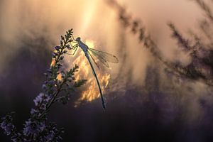 Burgfräulein in der Morgensonne von Mark Dankers