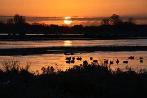 Ochtend in de polder