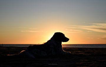Hond in de zon van Andrik van der Molen