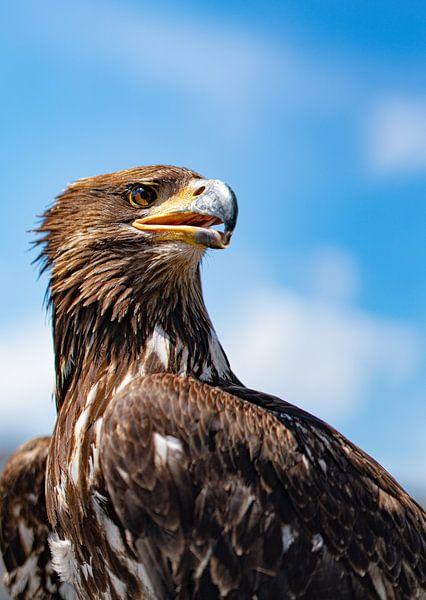 Eagle Eye van Jessica de Vries