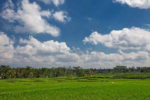 Bali rijstterrassen. De prachtige en dramatische rijstvelden van ubud in het centrum van Bali
