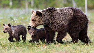 Braunbärenfamilie von Daniela Beyer