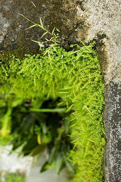 Grüne Wand von Martijn Stoppels