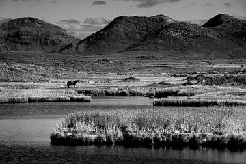 Pferd im Nationalpark Connemara von Bo Scheeringa Photography