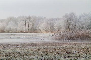 IJzel en mist in Nederland