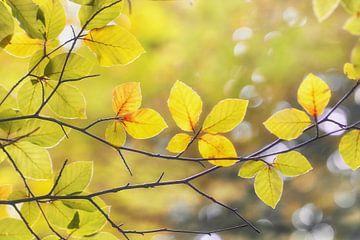 Gouden Herfst van Cynthia Derksen