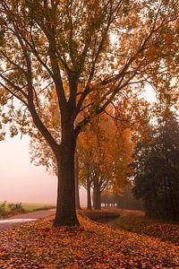 Herfst polder
