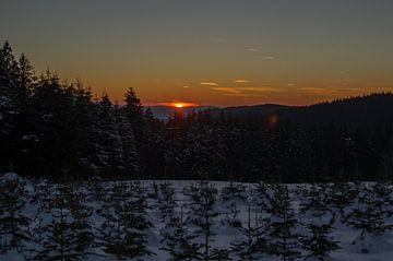 zonsondergang over een dennenboom plantage von Andrea Ooms