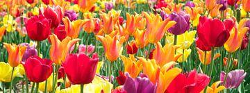 Tulpen van frans bouwmeester