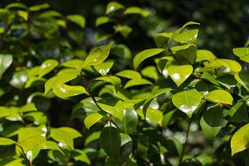 Groene bladeren close up