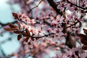 Roze lente van Steffen Gierok