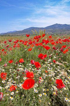 Kleurrijk in het veld van Henk Pijnappels