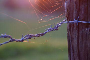 Prikkeldraad en spinnenweb in de zonsondergang. van Maarten Honinx