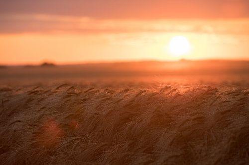 Sonnenuntergang auf Rügen van Manuél Mendoza