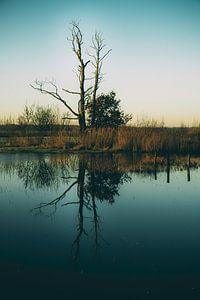 L'arbre mort sur Gerard van der Wal