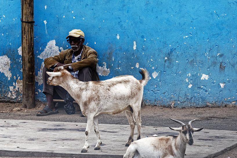 man met geiten van rene schuiling