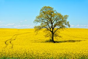Leuchtend gelbe Landschaft