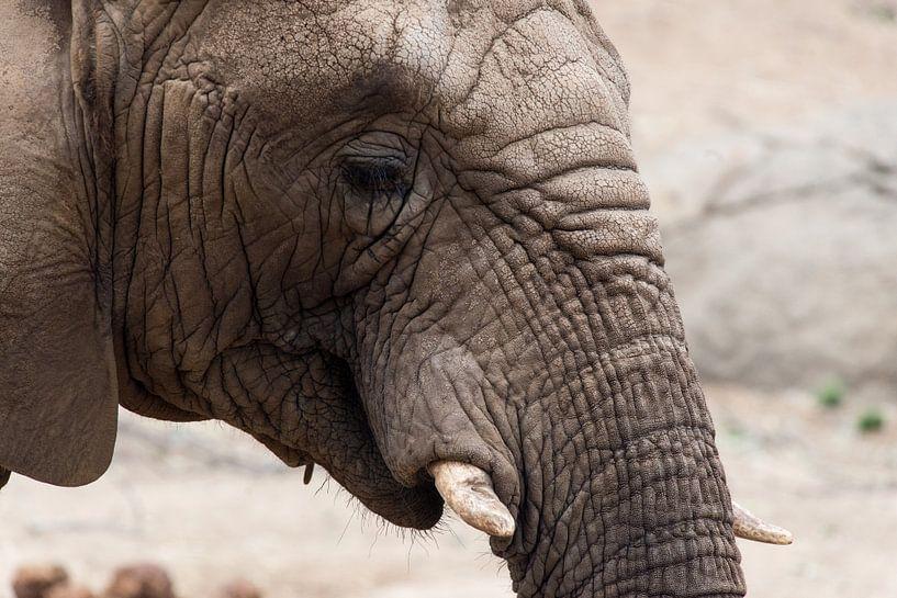 Afrikanischer Elefant von Atelier Liesjes