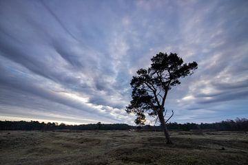 Sonnenaufgang auf dem Anwesen Heidestein Bornia. von Peter Haastrecht, van