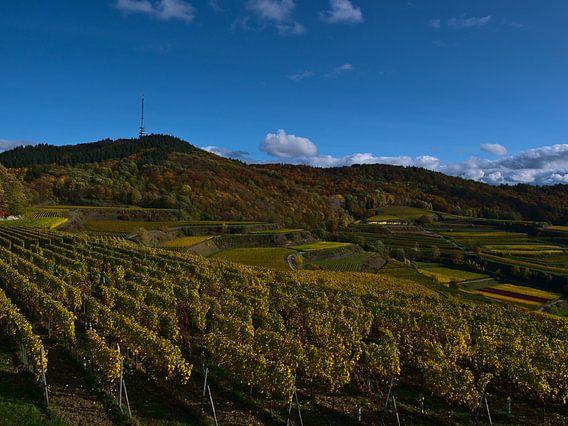 Panoramisch uitzicht over de wijngaardterrassen van de Kaiserstuhl in de herfst