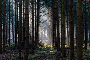 Light In The Dark Forest