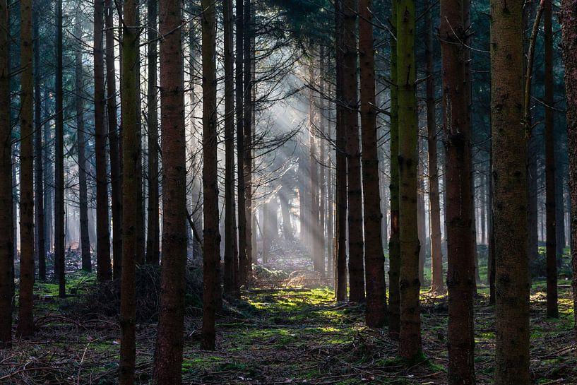 Light In The Dark Forest van William Mevissen