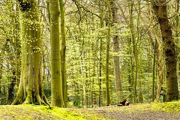 Lente in het bos sur Michel van Kooten