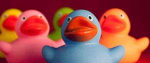 Nahaufnahme fröhlich bunte Badeenten von Andrea Loot