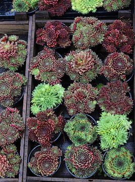 Pflanzen in einer Box auf dem Markt von Frans Versteden