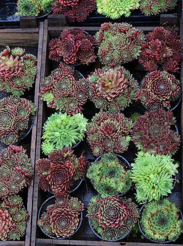 planten in een kistje op de markt