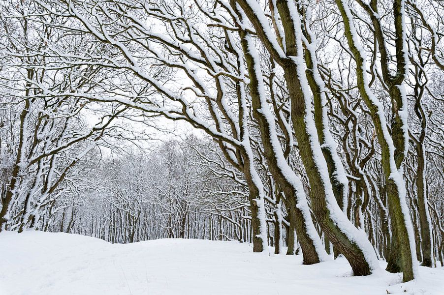 Besneeuwde bomen van Richard Guijt