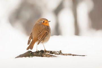 Robin im Schnee. von Albert Beukhof