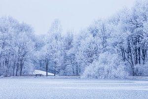 Witte bomen aan bevroren meer