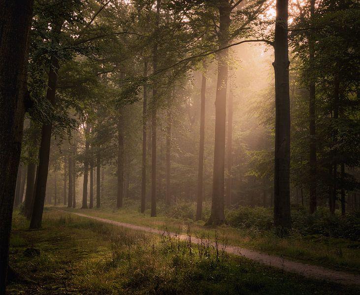 Infusion of Light van Jos Duivenvoorden