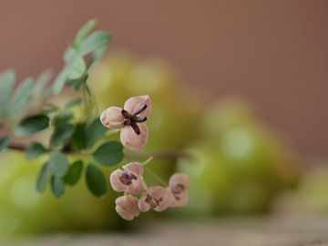 Stilleben mit zartrosa Blumen und weißen Trauben in Pastelltönen von ina kleiman