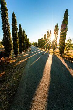 Toscaanse laan met mooie zonnige sfeer van Leo Schindzielorz