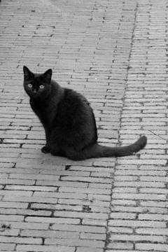 Utrecht - Black Cat van Wout van den Berg