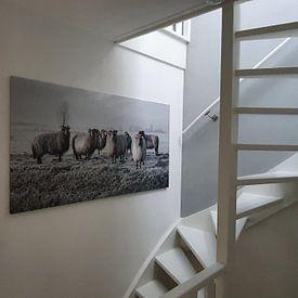 Kundenfoto: Schafe im Polder von MS Fotografie | Marc van der Stelt, auf leinwand