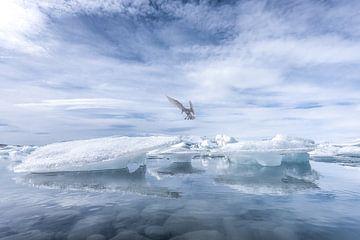 Jökulsárlón Island See von Leon Brouwer