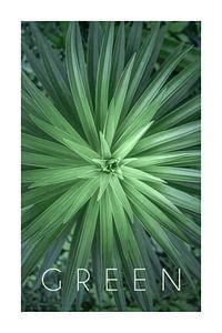 Green 07 von Christian Müringer