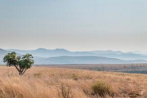 Savanne South Africa van Mark den Boer