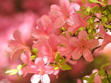 Bloemen van mies van berkum