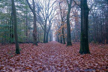 Nebliger Herbstwald am frühen Morgen in der Nähe von Zeist, von John Ozguc